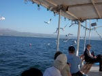 The Sea of Galilee is a large lake—but not too large.